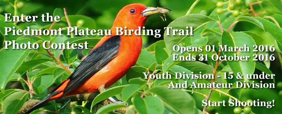 2016 Birding Trail Photo Contest