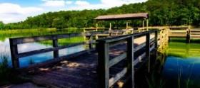 Piedmont Plateau Birding Trails Clay County Alabama