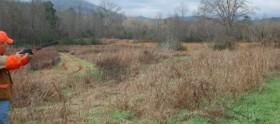 Mountain View Plantation