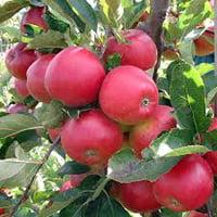 Holmestead Farm Annual Plant Sale @ Holmestead Farm | Alabama | United States